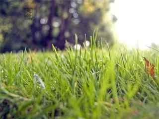 二十四节气处暑绿色青草地壁纸