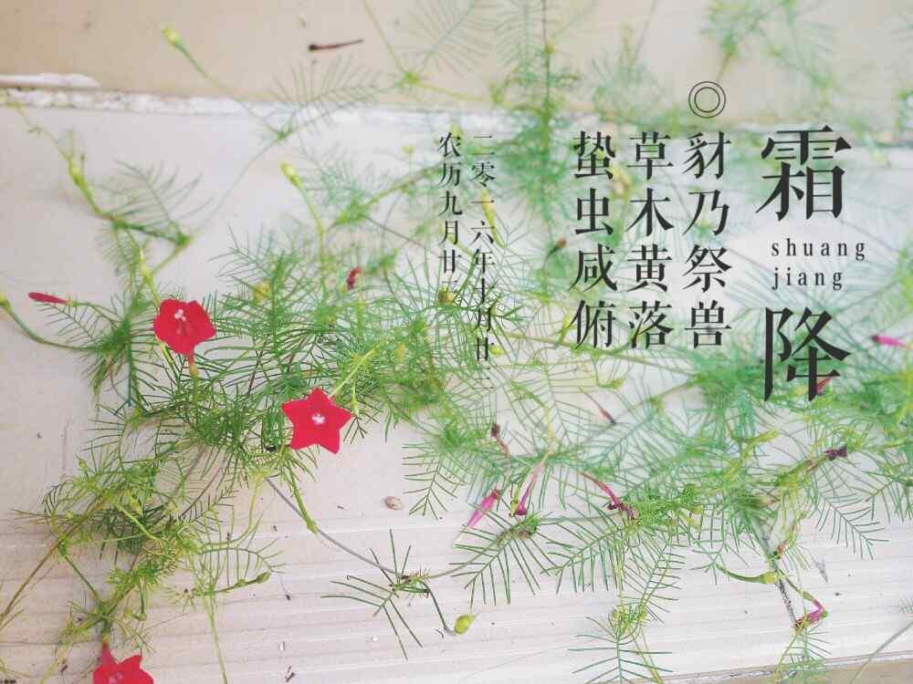2017年霜降小清新植物桌面壁纸