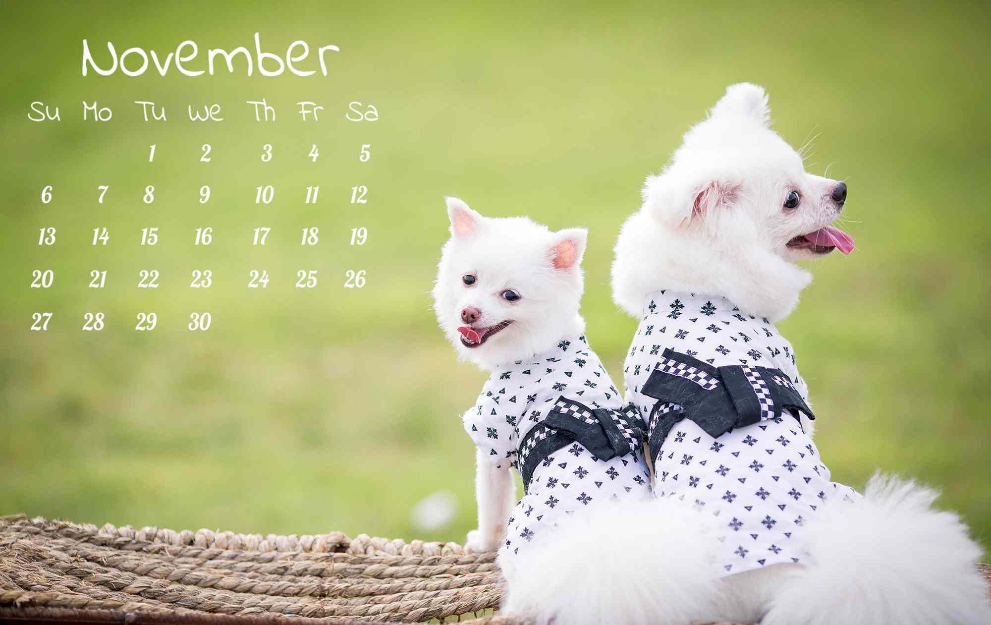 2016年11月日历壁纸之可爱的博美狗狗