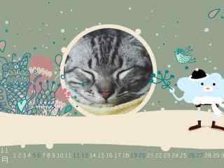 呆萌的美短小猫咪