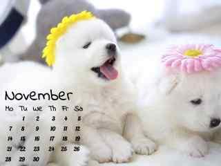 白色小清新萨摩耶小奶狗11月日历壁纸
