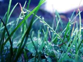 唯美清新绿草地上