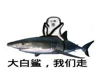 大白鲨我们走表情包