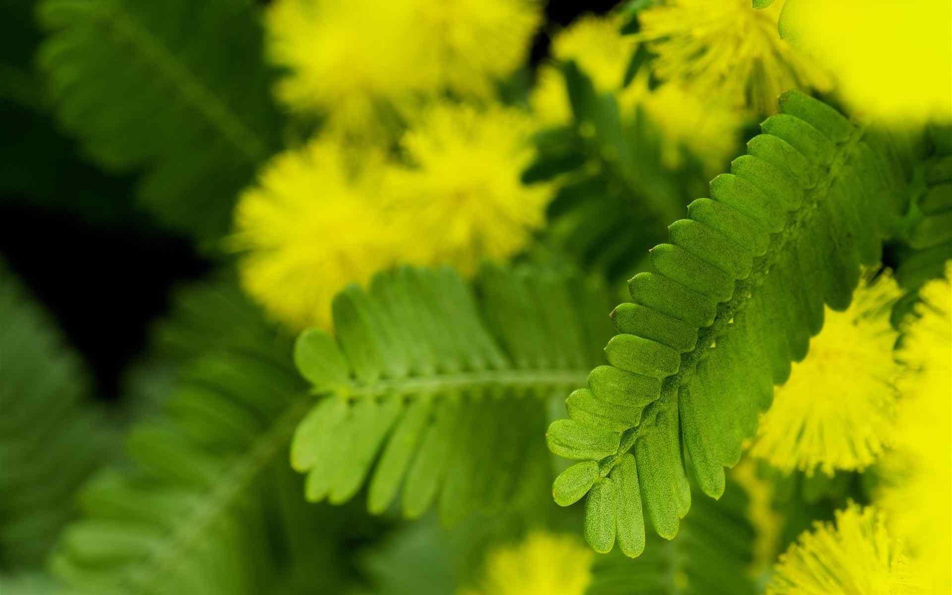 小清新绿色植物图片壁纸