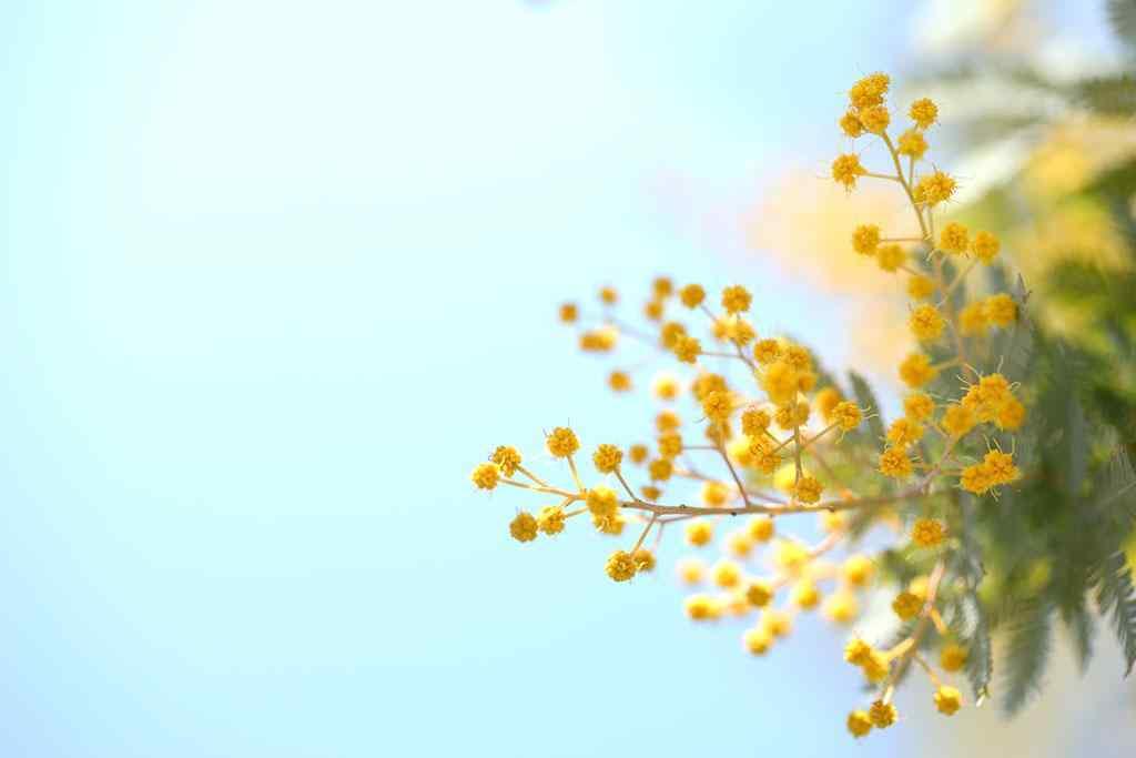 小清新植物图片壁纸