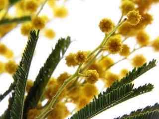 唯美小清新植物图片壁纸