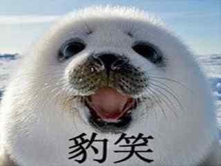 小海豹搞笑豹笑表情包