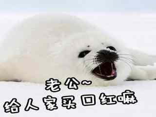可爱小海豹搞笑老公系列表情包