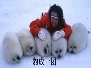 小海豹搞笑豹成一团表情包