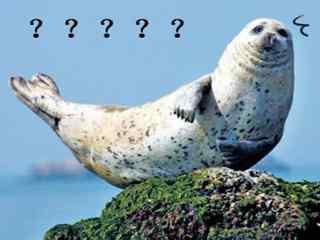 小海豹一脸问号表情包