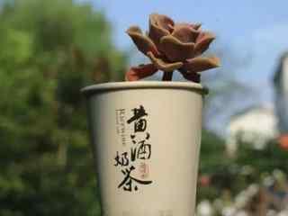绍兴创意特色美食黄酒奶茶文艺壁纸