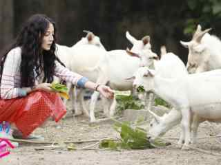 《漂亮的李慧珍》李慧珍喂小羊剧照图片