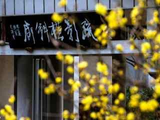 文化艺术熏陶的腊梅花桌面壁纸