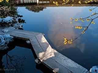 腊梅花与池塘相呼应桌面壁纸