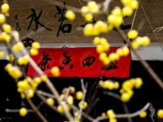 茶馆门庭的腊梅花桌面壁纸