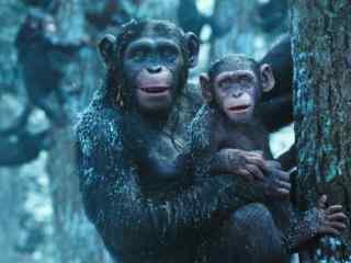 电影猩球崛起3终极之战剧照图片