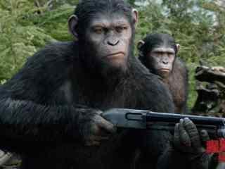 电影猩球崛起3凯撒剧照图片