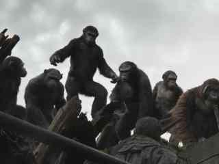 电影猩球崛起3终极之战猩猩群剧照图片