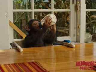 电影猩球崛起3小凯撒喝奶剧照