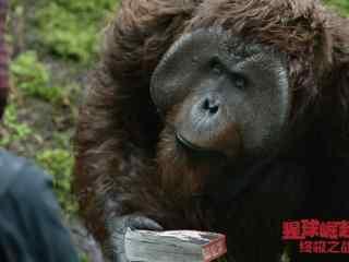 电影猩球崛起3大猩猩剧照图片