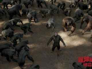 电影猩球崛起3猩猩群剧照图片