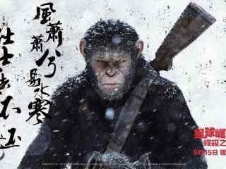 猩球崛起3终极之战电影海报壁纸