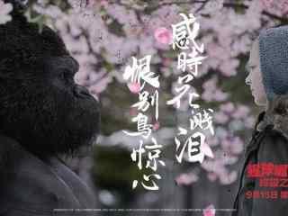 电影猩球崛起3诺瓦凯撒唯美海报