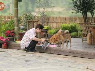 向往的生活第二季何炅喂狗剧照图片