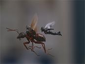 電影《蟻人2》黃蜂(feng)女和蟻人飛行劇照(zhao)圖ji) /></a></div></div><p><a href=