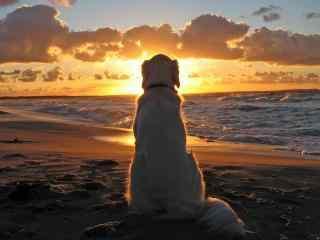 夕阳西下唯美静物