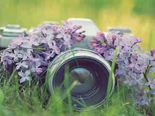 花丛中的相机唯美