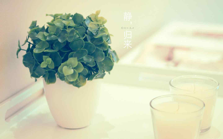 唯美的盆栽静物图片桌面壁纸
