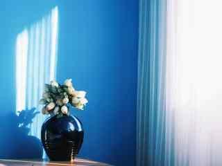 唯美的窗边植物静物图片桌面壁纸