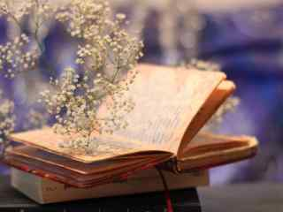 简约唯美书本和花