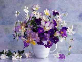 唯美的紫罗兰盆栽静物壁纸
