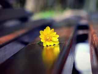 长椅上的小黄花桌