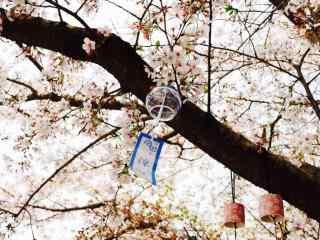 樱花树下的日式风铃桌面壁纸