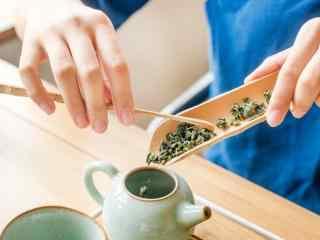 茶文化—将绿茶放置壶中桌面壁纸