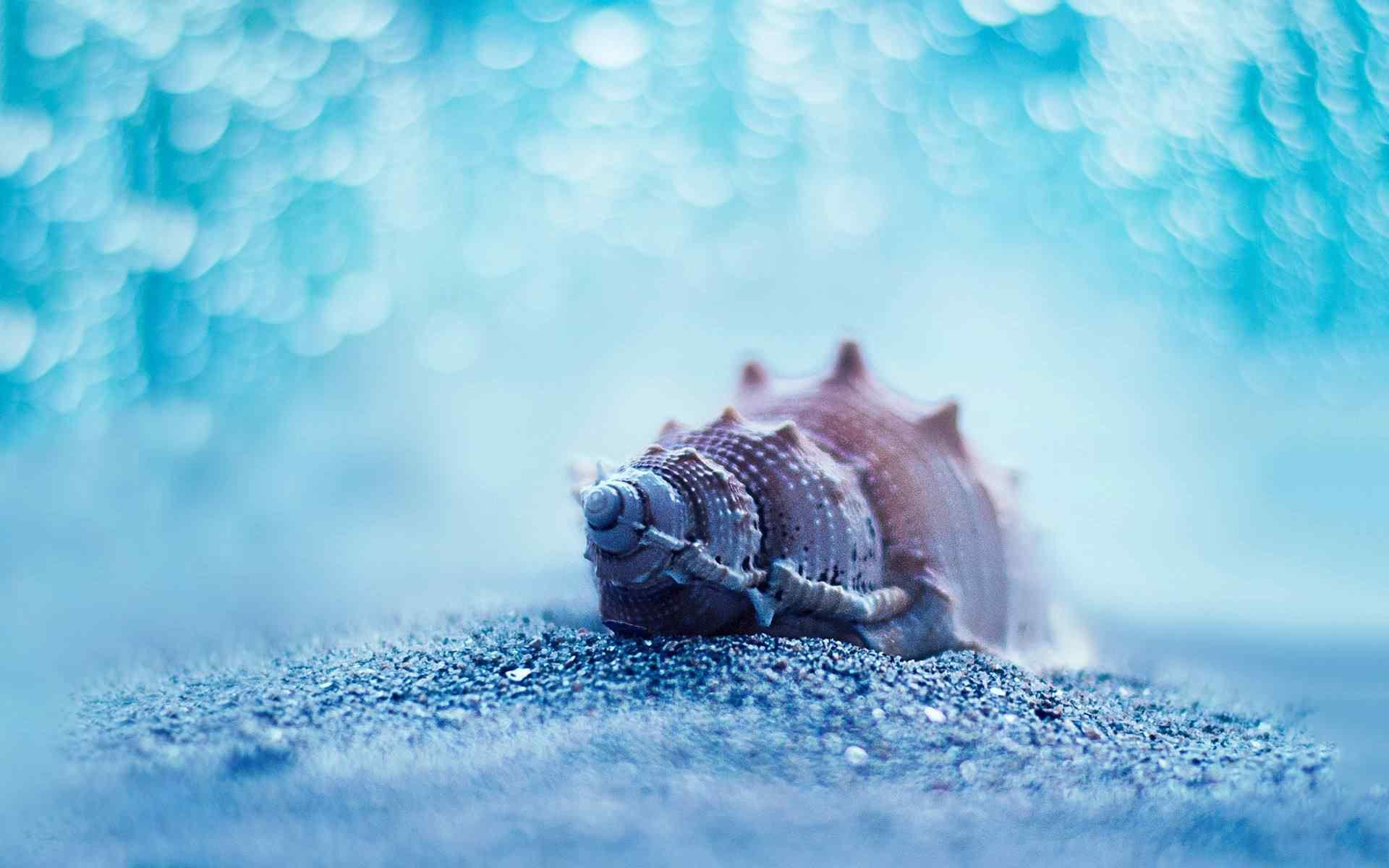 唯美蓝色沙滩贝壳桌面壁纸