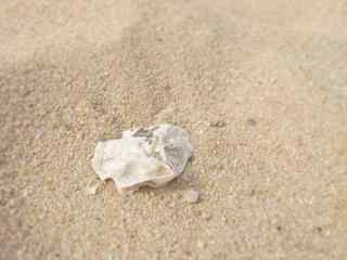 沙滩上的白色小贝壳桌面壁纸