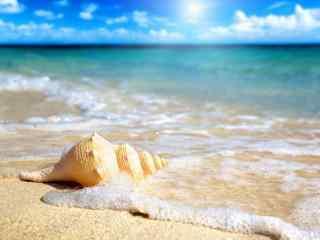 清澈海边的贝壳海螺桌面壁纸