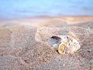 沙滩上的小贝壳桌面壁纸