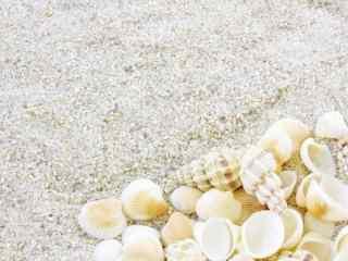 海边贝壳沙滩桌面壁纸