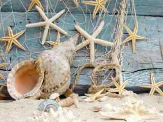 小清新海边贝壳装饰桌面壁纸
