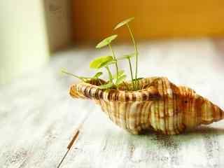 创意可爱贝壳上种植小草桌面壁纸