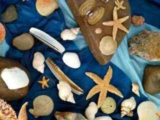 唯美小清新创意贝壳摆拍桌面壁纸