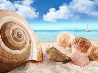 海边的上摊上的贝壳桌面壁纸