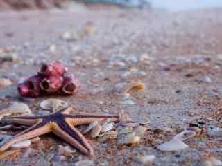 沙滩上的海星和贝壳桌面壁纸