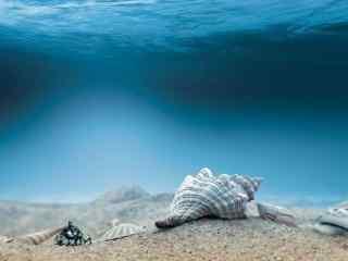 深海底下的贝壳桌面壁纸
