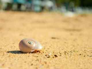 沙滩上可爱的贝壳桌面壁纸